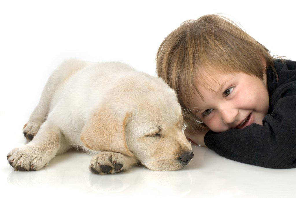 O Bebê e os Animais de Estimação